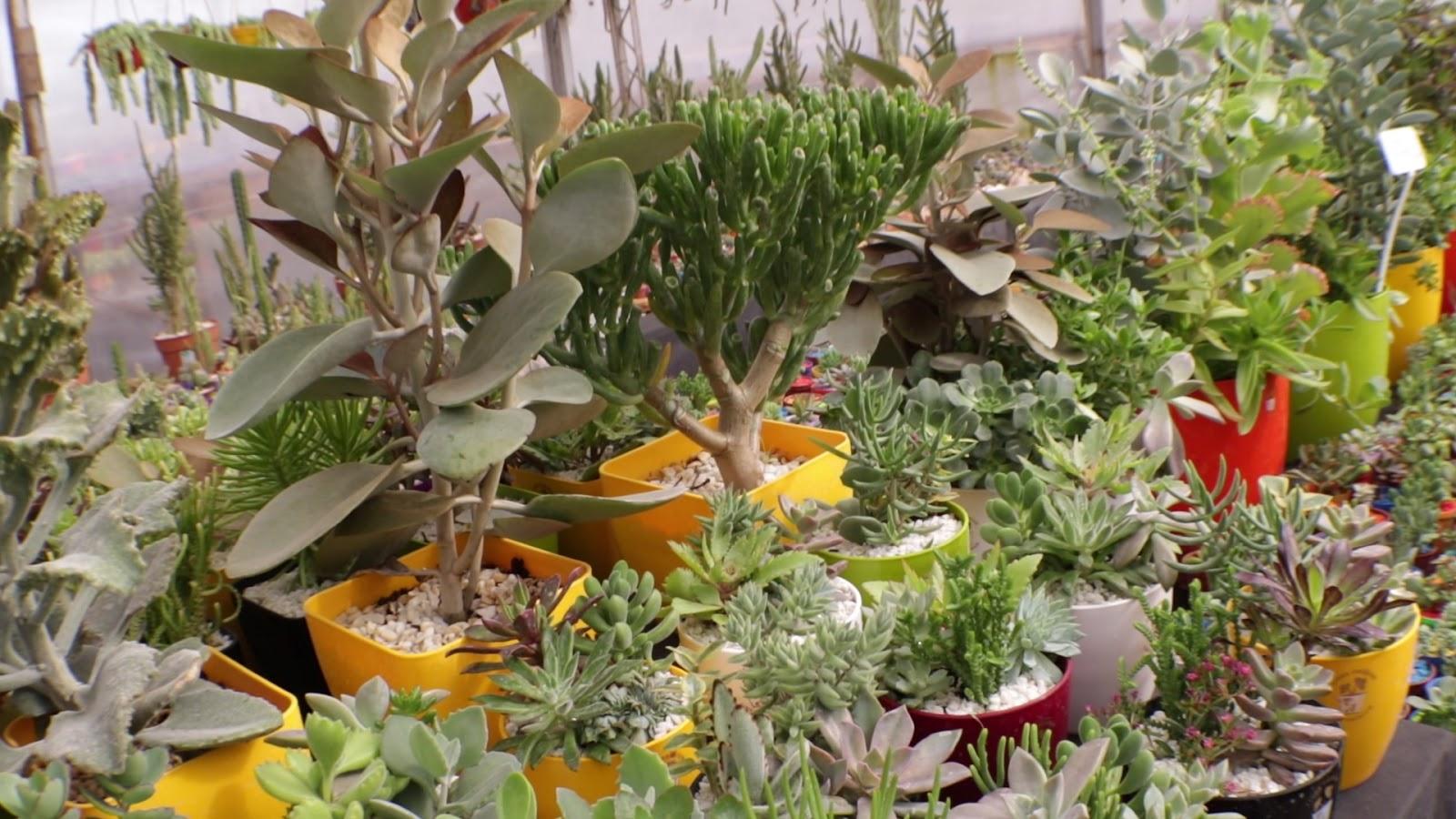 Dos m todos muy faciles para reproducir nuestras - Cosas del jardin ...