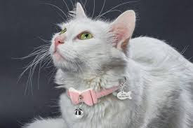 Cat Collars - They Are a Necessity