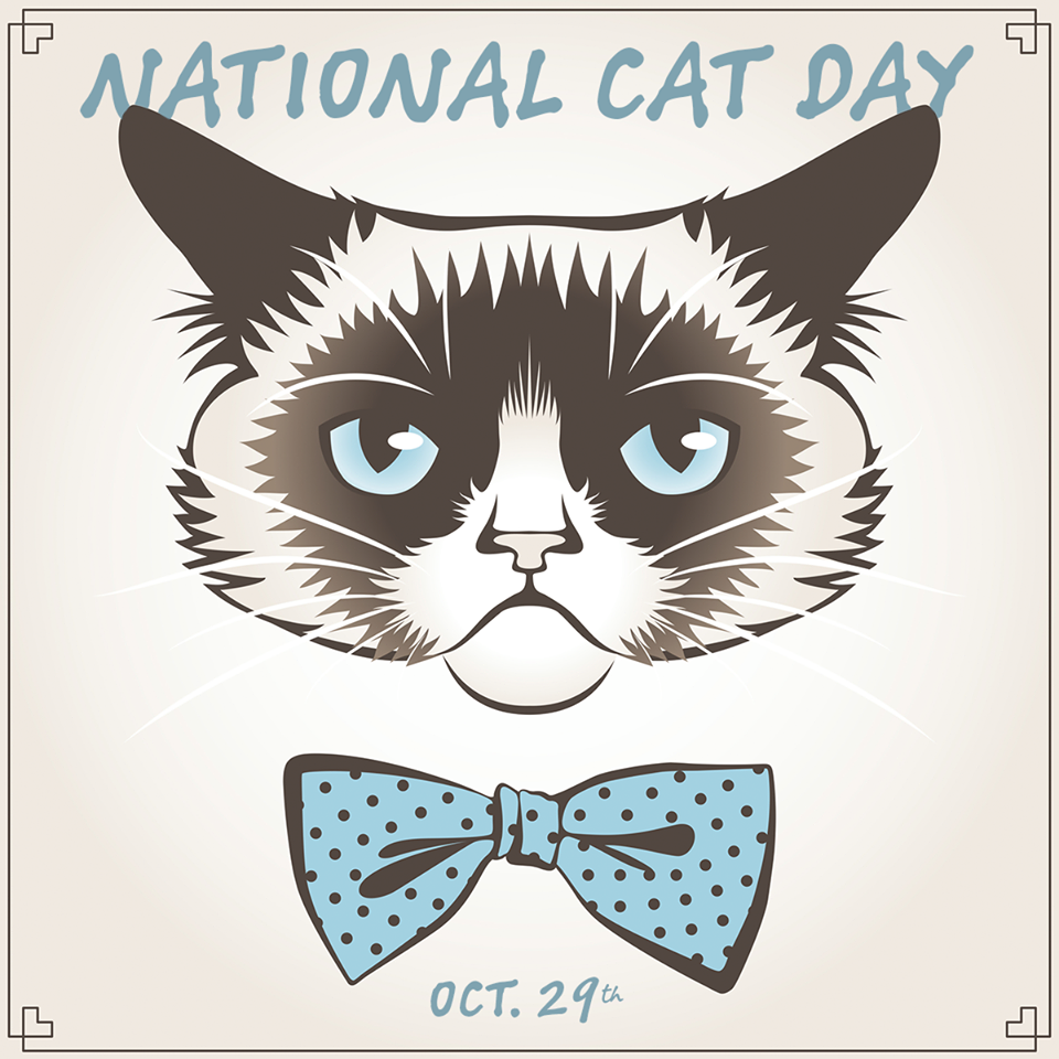 National Cat Day Wishes Beautiful Image