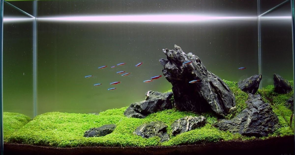 Tanaman yang Biasa Digunakan dalam Aquascape bagi Pemula