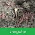 Trùn quế về Ea Hleo: cảm ơn anh Dũng mua 20kg trùn quế sinh khối