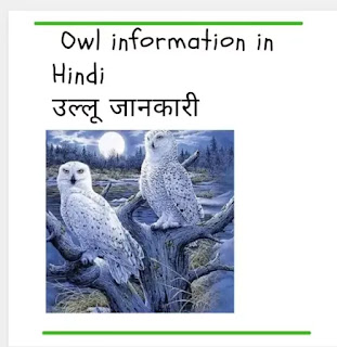 owl questions answers