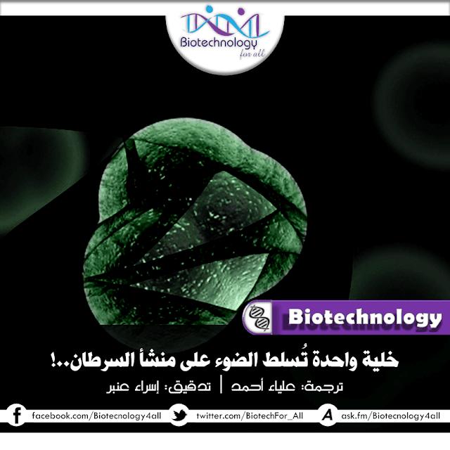 خلية واحدة تسلط الضوء على منشأ السرطان