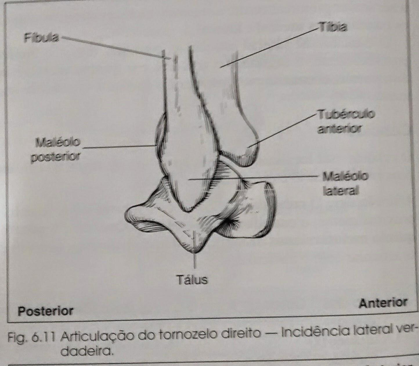 Radiologia Nossa Vida Articulacao Do Tornozelo