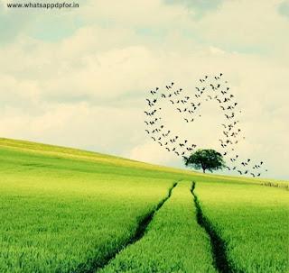 nature whatsapp dp download