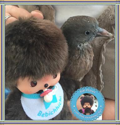 Baby le Bebichhichi et Colombine le bébé pigeon -pigeonneau - oisillon