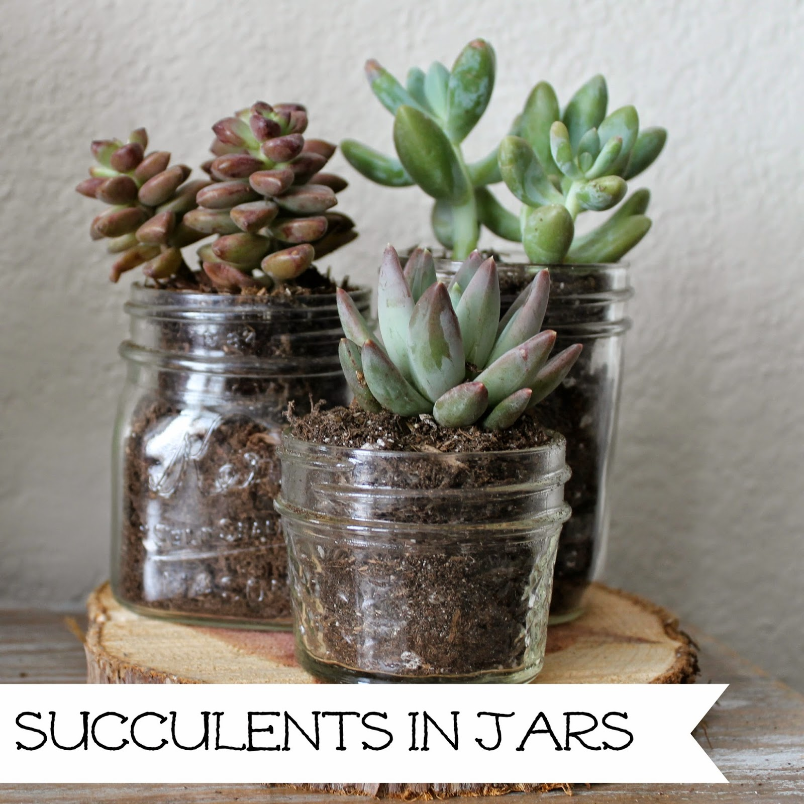 http://wonderfullymadebyleslie.blogspot.com/2014/05/succulents-in-jars.html