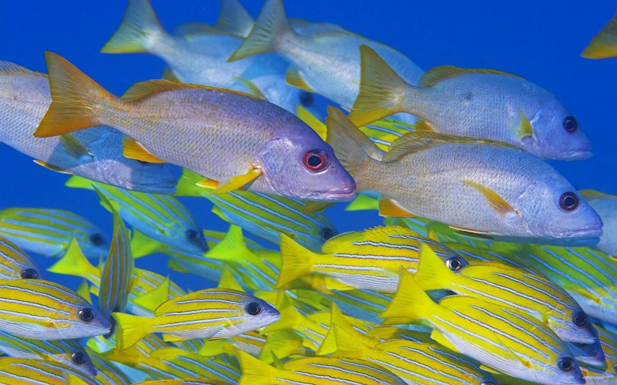 Fishes in Sea Widescreen HD Wallpaper