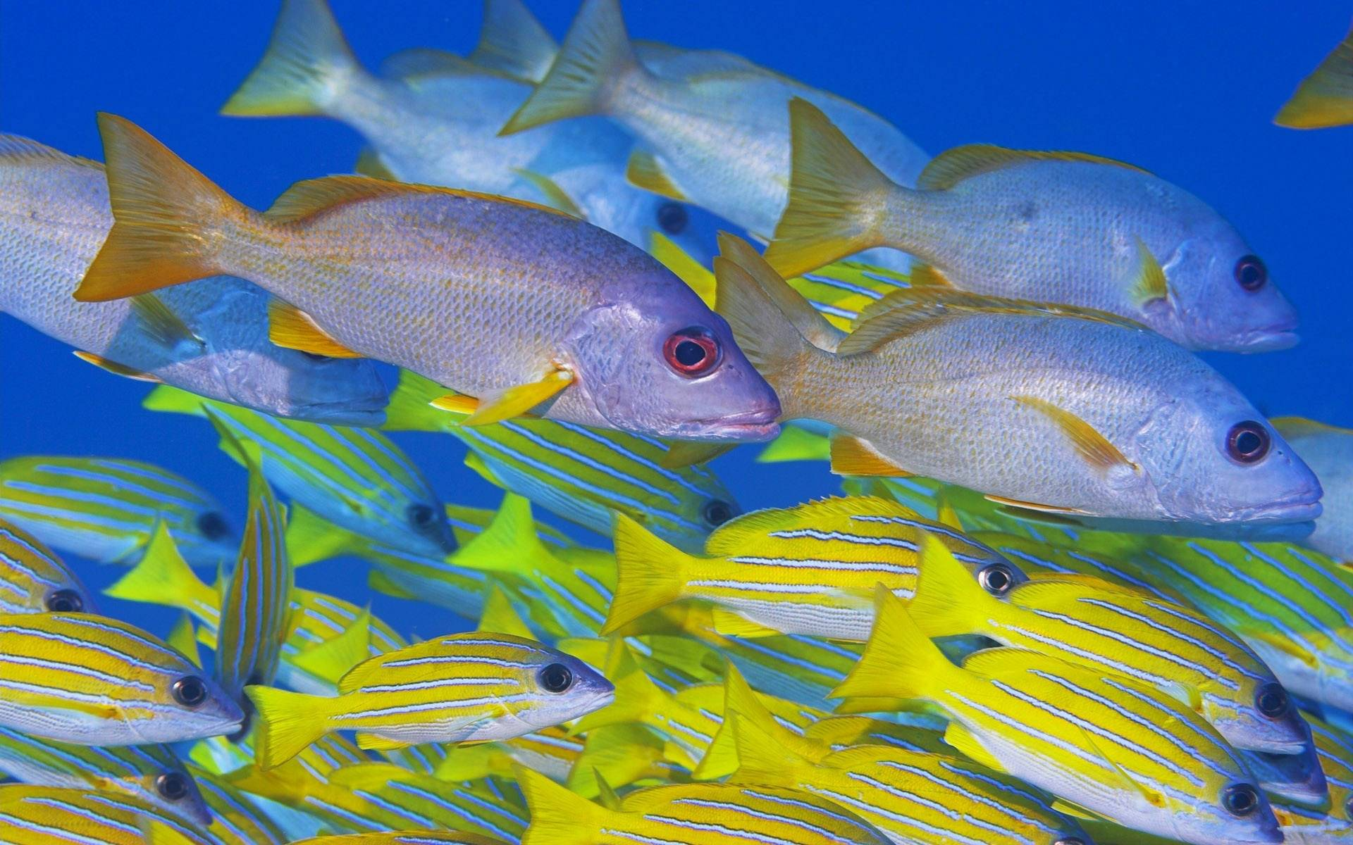 Under sea wallpapers for Fish in sea