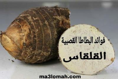 فوائد البطاطا القصبية او ما يسمى بالفرنسية القلقاس