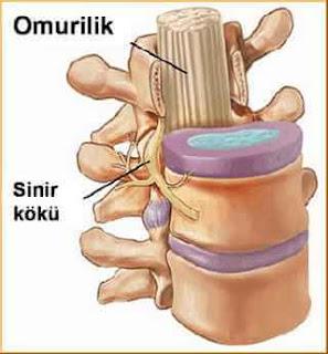 omurga yaralanmasi