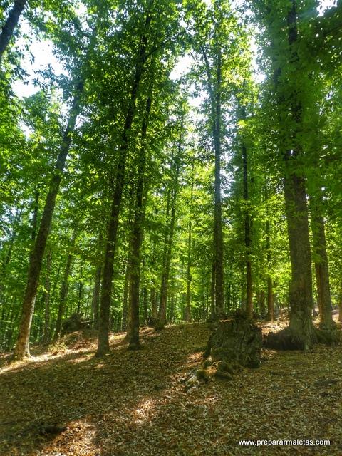 bosque mágico de El Tiemblo