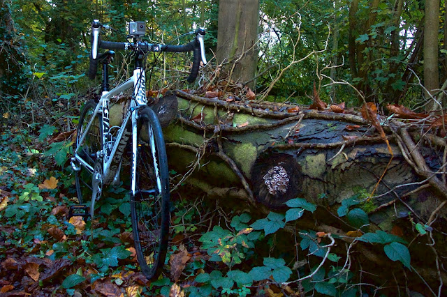 autumn leaves, bike tree trunk