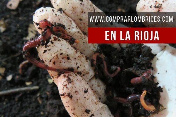 Dónde Comprar Lombrices en La Rioja
