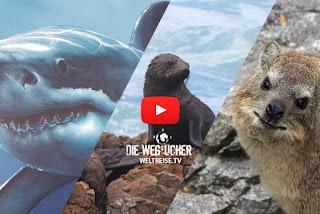 Tauchen mit Haien in Südafrika, Gansbaai und Hermanus