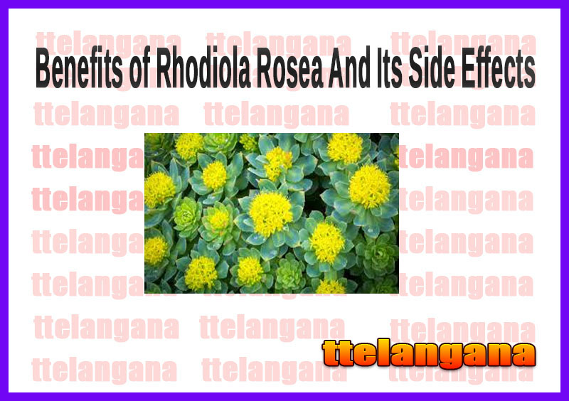Benefits of Rhodiola Rosea And Its Side Effects