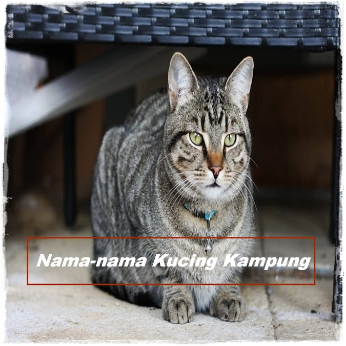 Nama-nama Kucing Kampung yang Cocok untuk Peliharaan di Rumah