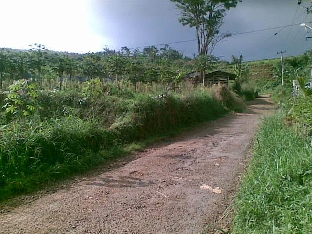 Foto(5388) Di Jual Tanah Murah 96 Ha Lokasi Kawasan Puncak Jual tanah di cipanas jual tanah di puncak