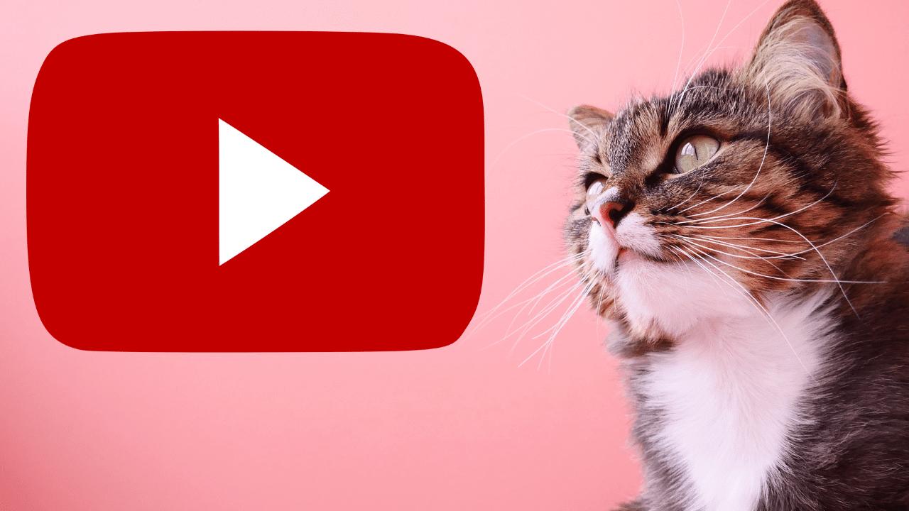 Gatos youtubers