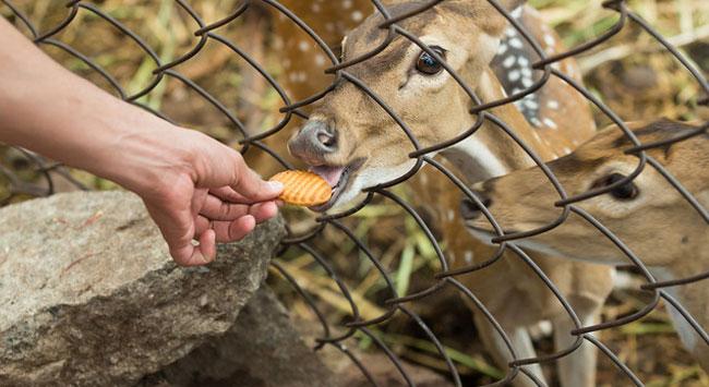 Indira Gandhi national zoological park Visakhapatnam, Andhra Pradesh