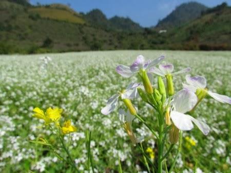 hoa cai trang