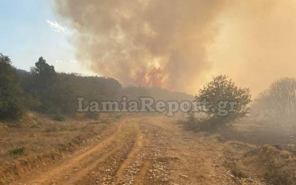 Στυλίδα: Φωτιά σε δασική έκταση στο Λογγίτσι – Εντολή εκκένωσης για τον οικισμό