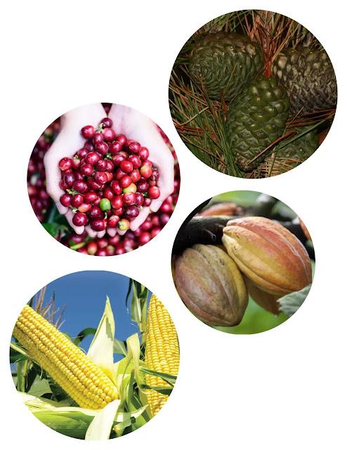 Hasil dari tanaman pertanian bersifat fisik dan nonfisik. Tanaman pertanian berasal dari tumbuh-tumbuhan liar yang mengalami proses seleksi dan domestikasi (penjinakan) sejak peradaban manusia yang menetap muncul. Oleh karena itu, seleksi dan domestikasi disebut sebagai salah satu induk pertanian. Dewasa ini terdapat sekitar 1.000-2.000 spesies tanaman pertanian di seluruh dunia, tetapi hanya 100-200 spesies pertanian yang berperan dalam perdagangan dan hanya 15 spesies yang menjadi tanaman sumber pangan dunia.