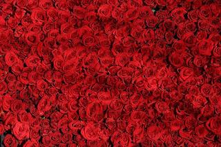 rose-www.healthote25.com