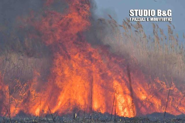 Πυρκαγιά στο βάλτο Νέα Κίου