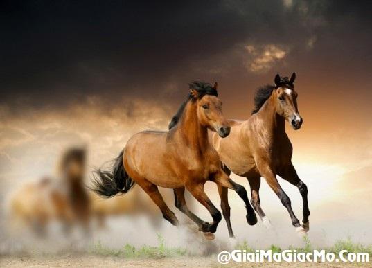 Giải mã giấc mơ thấy Ngựa & ngủ nằm mơ thấy con Ngựa
