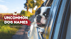 Uncommon Dog Names For Male And Female Name List 2020