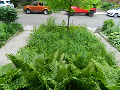 Toronto Leslieville Front Garden Weeding and Makeover Before by Paul Jung Gardening Services--a Toronto Organic Gardener