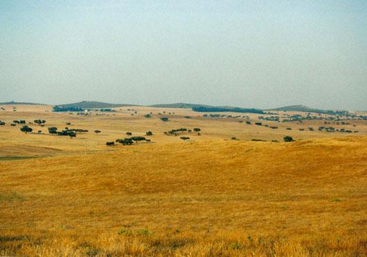 Loba Das Estepes: Rússia&ChinaTudoJunto: Rússia: Vegetação