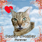 Paddy O'Malley Forever