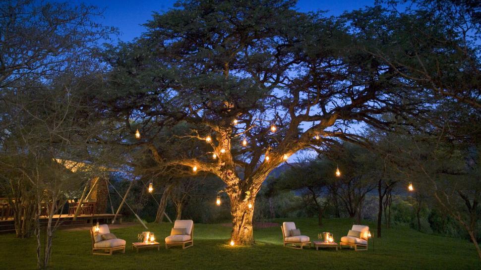 Sit Under Lantern Tree