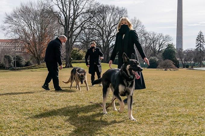 Biden manda sus perros a Delaware tras el ataque a un miembro de su seguridad