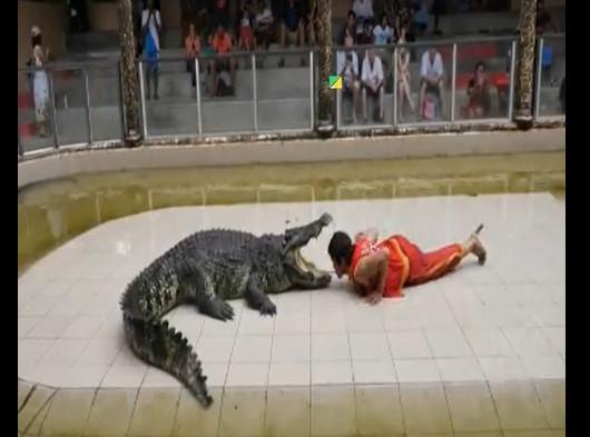تمساح يقطع يد رجل أثناء الترويض
