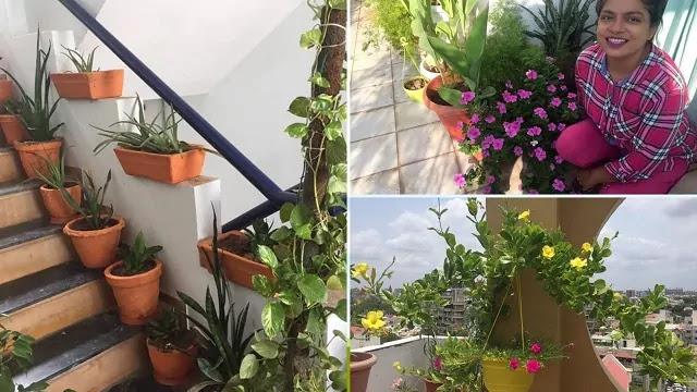 garden of ankur sethi