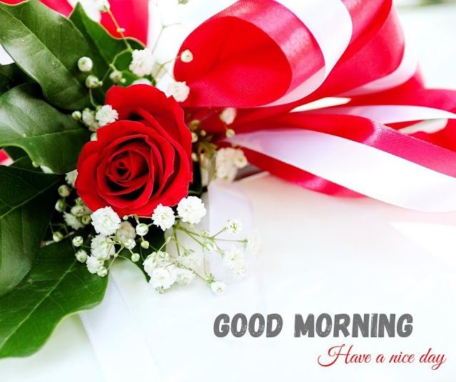 flowers photos with good morning