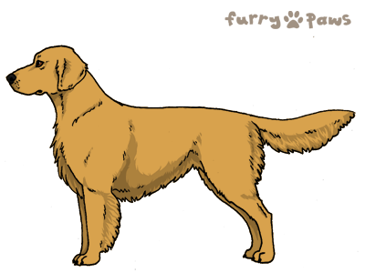 Furry Paws Dog Breed Colors Golden Retriever Colors