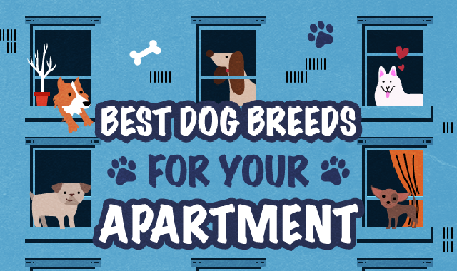 Best Dog Breeds for Apartment Living #infographic