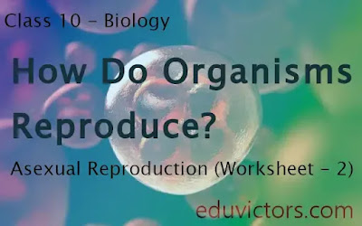 Class 10 - Biology - Chapter - How do Organisms Reproduce - Asexual Reproduction (Worksheet - 2)(#class10Biology)(#eduvictors)