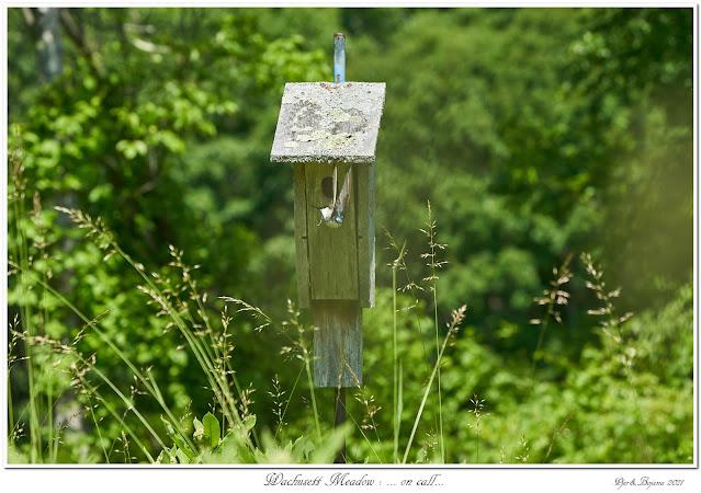 Wachusett Meadow: ... on call...