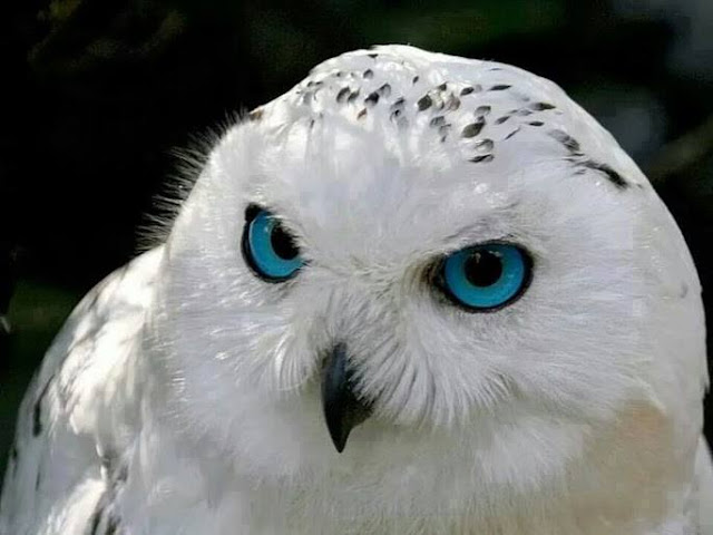 Beautiful animal eyes