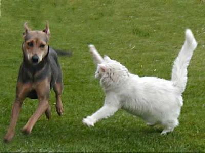 Peleas entre perros gatos