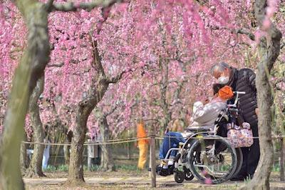 バリアフリー対応の「なばなの里」で春の写真撮影