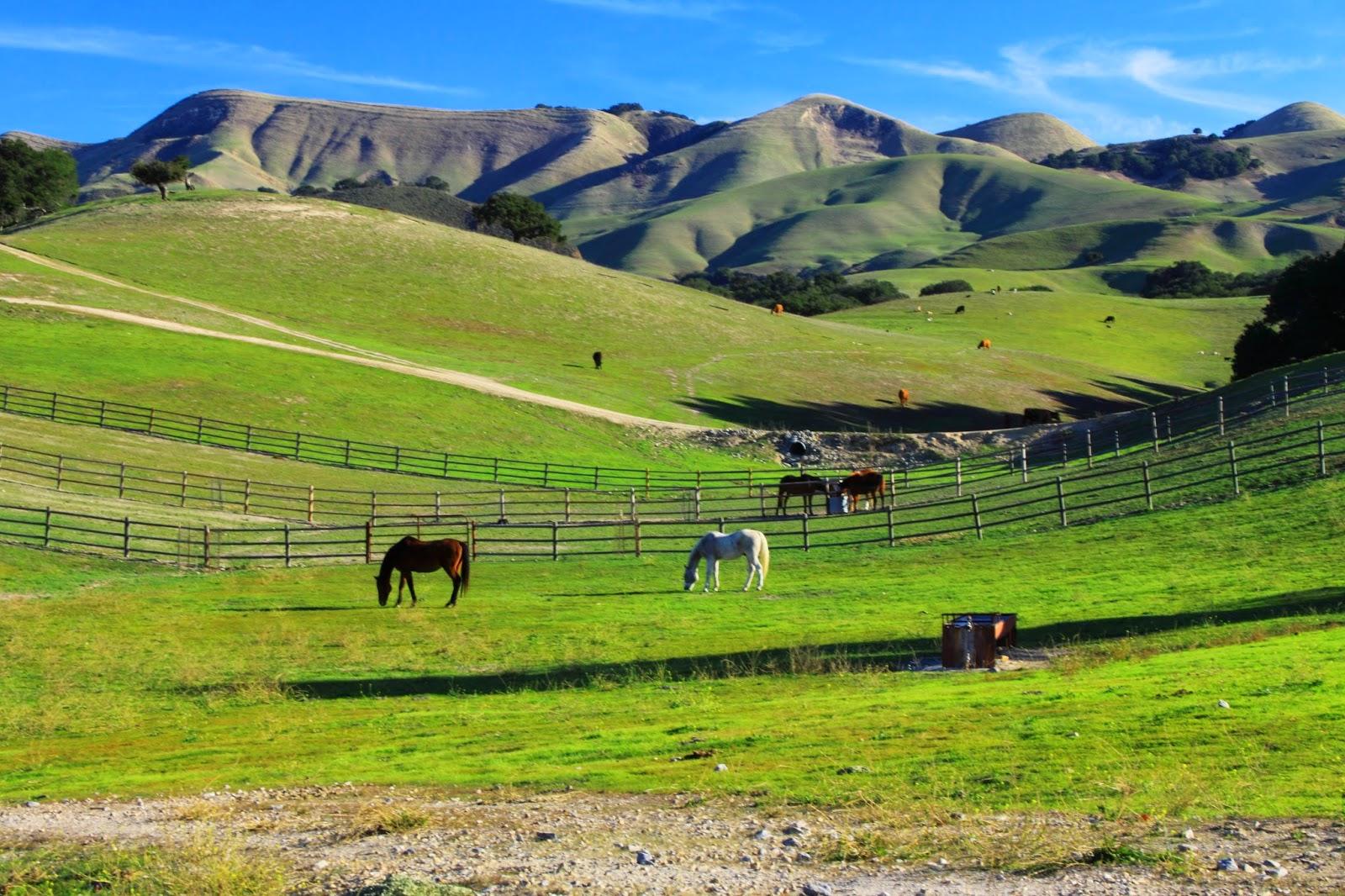 California Central Coast Living Horse Property Near San