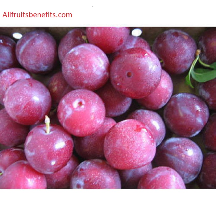 black plum benefits,java plum benefits,nutritional value of plums,benefits of eating plums,plum fruit benefits for skin,dried plums benefits,alpakoda palam,plum fruit benefits during pregnancy,dried prunes benefits,black jamun benefits,aloo bukhara in pregnancy,benefits of eating prunes,kala jamun benefits,plum juice benefits,albakara fruit benefits,plum vitamins,naval palam benefits,nutritional value of prunes,nerale hannu benefits,alpakoda fruit benefits,alpakoda fruit during pregnancy in tamil,plum advantages,red plum benefits