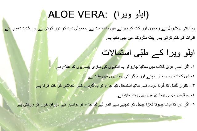 Aloe Vera ke fayde aur is se bimari ka ilaj