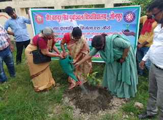जीवन बचाना है तो वृक्ष लगाना है: प्रो.निर्मला एस. मौर्य | #NayaSaberaNetwork